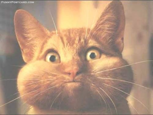 скачать бесплатно картинки прикольных кошек: